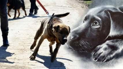Öldürülmesi günah olmayan hayvanlar! Zarar veren hayvanı öldürmek günah mı?