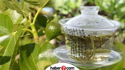İncir yaprağının faydaları nelerdir? İncir yaprağı çayı nasıl hazırlanır?