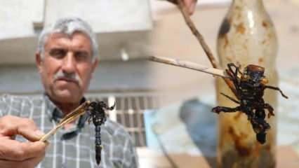 Manisalı Mehmet Bozkurt 21 yıldır topladığı akreplerle karışım hazırlıyor!