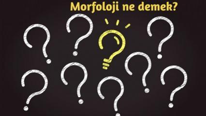 Morfoloji nedir ve neyi inceler? Morfoloji TDK anlamı nedir? Morfoloji hakkında kısaca bilgiler
