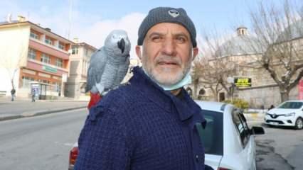 Niğde'deki papağan 'Paşa' 500 kelime konuşuyor, dua ediyor, ilahi okuyor ve zikir çekiyor!