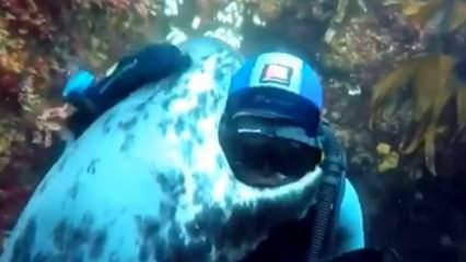 Su altında karşılaştığı dalgıca sarılan deniz aslanı!