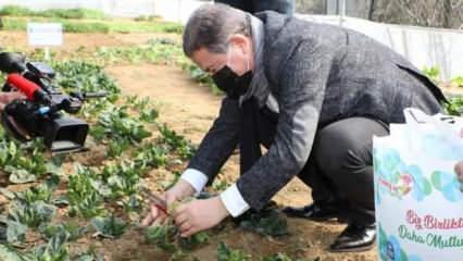 Eyüp Sultan Belediyesi'nin kurduğu seralarda yetişen sebzeler ihtiyaç sahiplerine gidiyor!