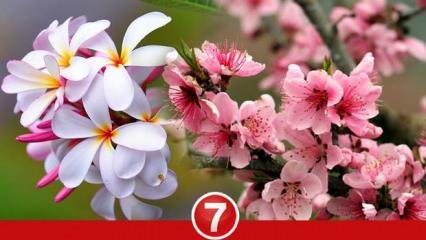 Rüyada çiçek görmek ne anlama gelir? Rüyada renkli çiçek bahçesi görmek neye işaret eder?