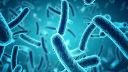 Türk bilim insanları iki yeni bakteri keşfetti