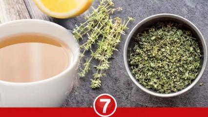 Kekik çayı faydaları nelerdir? Hamilelikte kekik çayı içilir mi? Kuru kekik çayı nasıl yapılır?