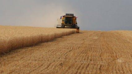 Tarım, bünyesindeki 10 sektörün 8'iyle ihracatta atağa kalktı