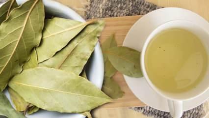 Ceviz yaprağı çayının faydaları nelerdir? Ceviz yaprağı çayı nasıl yapılır?