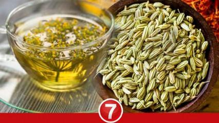 Rezene çayı ne işe yarar? Rezene çayı zayıflatır mı? Rezene çayı faydaları...