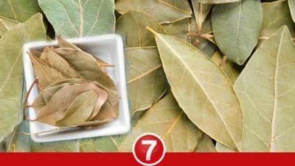 Evde defne yaprağı yakmak ne işe yakmak be işe yarar? Defne yaprağı çayı faydaları nelerdir?