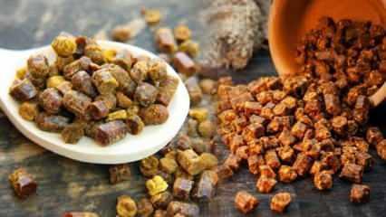 Sindirim dostu probiyotik besin: Arı ekmeği