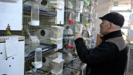 Bir çift kuşla başladığı hobisi 200 kuşluk bir tutkuya dönüştü!