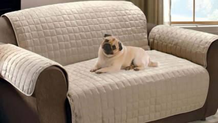 En dayanıklı kumaşlar! Evcil hayvanı olanlar için koltukları zarardan koruyan kumaşlar