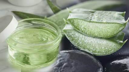 Aloe vera yüze faydaları nelerdir? Aloe vera ile cilt bakımı nasıl yapılır?