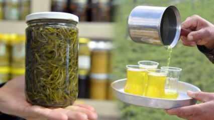 Zahter bitkisi 4 ayda toplanıyor, kilogramı 20 liradan satılıyor!