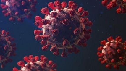 Koronavirüs'te korkulu rüya: Güney Afrika varyantı