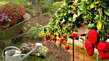 Baharın müjdecisi Nisan ayında hangi sebzeler ekilir?