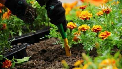 Nisan ayında hangi sebzeler ekilir? Nisan ayında dikilecek olan meyve çeşitleri nelerdir?