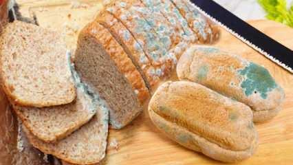 Ramazan'da ekmeğin küflenmesi nasıl önlenir? Ekmeğin bayatlayıp küflenmesini önlemenin yolları