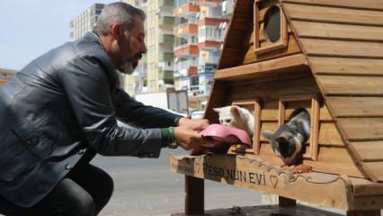 Yaralı sokak kedisini sahiplendi, 5 bin liraya lüks kulübe yaptırdı