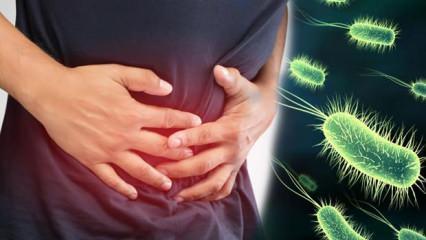 Bakteri tehlikesi: Çocuklukta bulaşıyor, ömür boyu kalıyor!