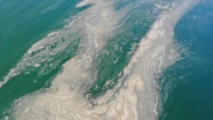 Deniz salyası Çanakkale'de de görüldü: Balıkçılığı tehdit ediyor