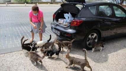 Emekli mühendis 10 yıldır 120 sokak hayvanını besliyor!