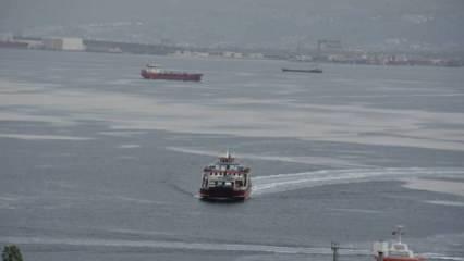 İzmit Körfezi'nde deniz salyasıyla mücadele sürüyor