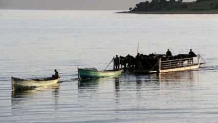 Mada Adası'na koronavirüs uğramadı