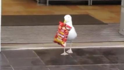 Markette gidip alışveriş yapan martı sosyal medyayı salladı!