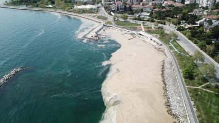 Marmara Denizi'nde görülmeye devam ediyor! Büyük tehlike kapıda