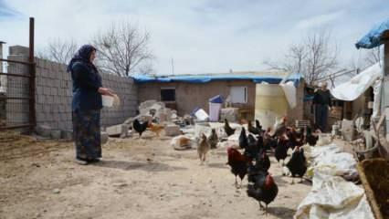 Mikro kredi ile 11 yılda çiftlik kurdu