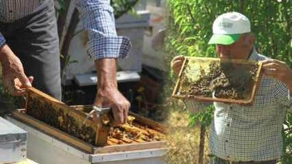 10 yıldır arıcılıkla uğraşan adam arı dolu çıtayı öpüp, arıları eliyle tutuyor