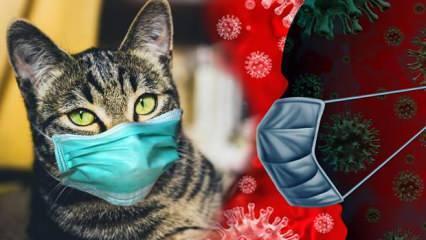 KKTC'de ilk kez insandan evcil hayvana koronavirüs bulaştı