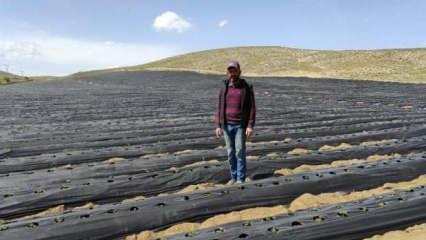 Kahramanmaraş'ta ot bitmeyen tarlalarda üretim yapıyor
