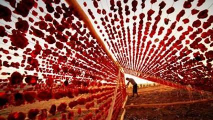 Gaziantep'in özel lezzeti 'Dolmalık biber kurusu' tescillendi
