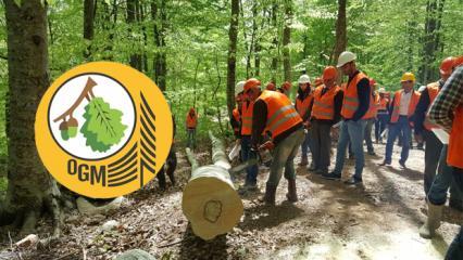 Orman Genel Müdürlüğü'nden 2 bin işçi alımı! OGM başvurusu ne zaman yapılacak?