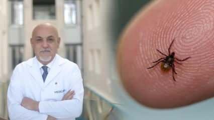 Enfeksiyon uzmanı uyardı! Kene ısırmaları hayati önem taşıyor