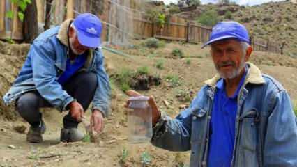 Erzurum'da yetişmez dediler, kavanozda lavanta yetiştirdi!