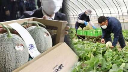 Japonya'da özel üretim 2 adet kavun 208 bin liraya satıldı!