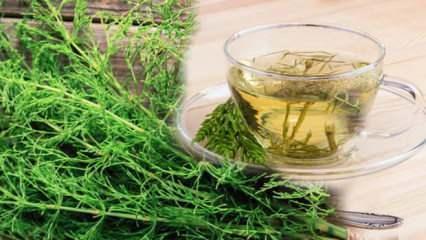Kırkkilit otu ne işe yarar? Kırkkilit otu çayı faydaları nelerdir?