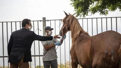 Adalar'da ölen at sayısı 226'ya yükseldi! İBB Başkanı 'ölüm sessizliği'nde