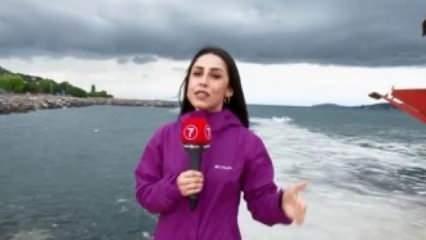 Deniz salyasının nedeni sadece iklim değişikliği değil!