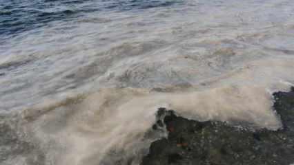 Geleceğin yetişkinlerine deniz salyası eğitimi