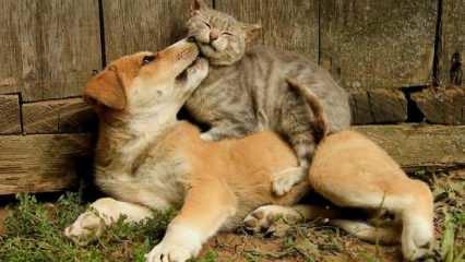 Rüyada kedi yavrusu görmek hayırlı mıdır? Rüyada kedi ve köpek yavrusu sevmek neye işaret?