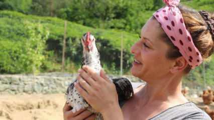 Rizeli girişimci kadın, köyüne dönüp tavuk çiftliği kurdu