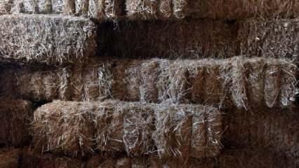 Kuraklık etkisi: Saman fiyatları ikiye katlandı