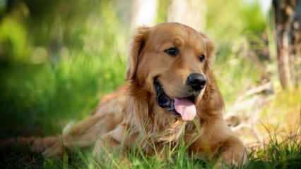 Rüyada köpek ısırması görmek ne anlama gelir? Rüyada köpek saldırısından kaçma neye işaret eder?