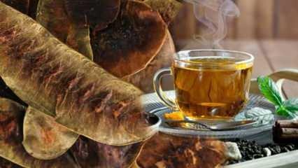 Açlık otu faydaları nelerdir? Deve gözü otu zayıflatır mı? Açlık otu çayı nasıl hazırlanır?
