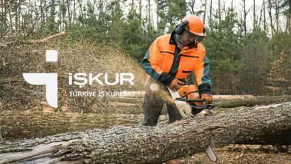 Devlet Orman İşleri Müdürlüğü'ne orman işçisi alımı bugün sona eriyor!